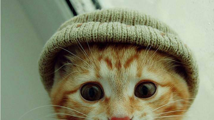 Small Cat Wearing A Cap